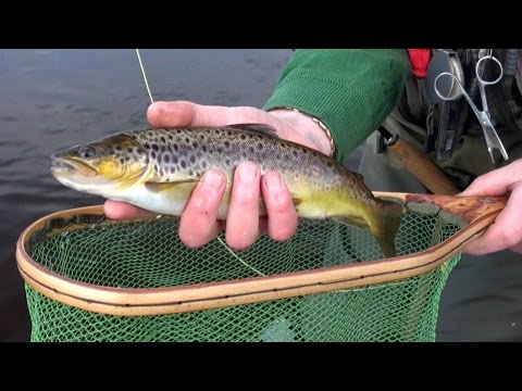 How To Fly Fish For Wild River Brown Trout, In Ireland-Tips & Methods