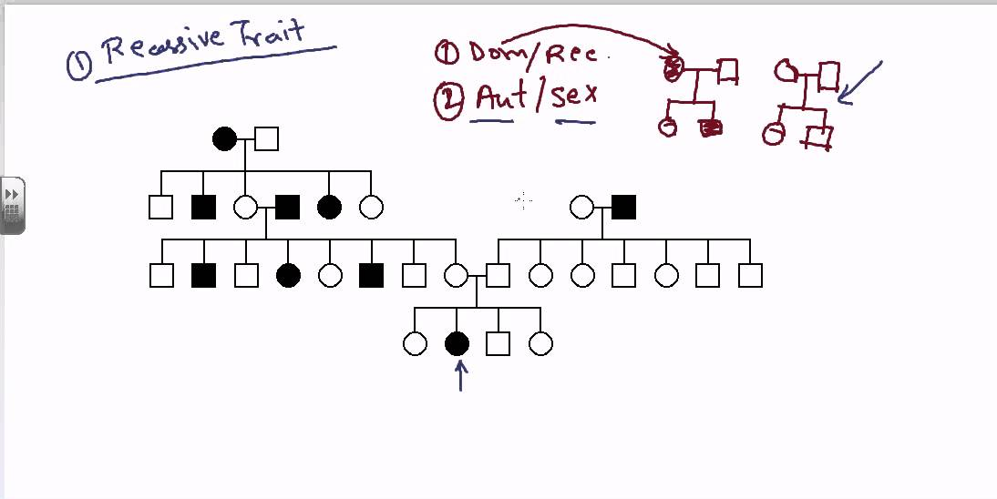 Pedigree Analysis Autosomal Recessive Youtube