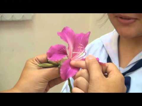 (ตัวอย่างวิธีการสอนวิชาชีววิทยา) ส่วนประกอบของดอกไม้  ครู+นักเรียน