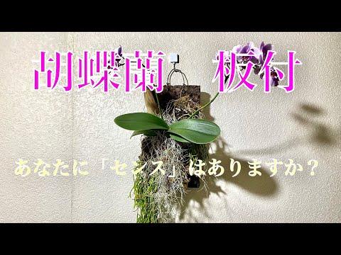 ミディ胡蝶蘭の板付方法。【Youtubeで】