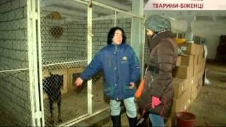 В Киеве есть приют, который специализируется на животных из Донбасса - Чрезвычайные новости, 11.12
