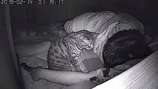 Adam Gizli Kamera Kurdu ve Kedi O Uyurken Bunları Yaptı