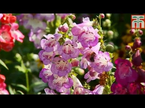 Thompson and Morgan's New Varieties for 2014 video