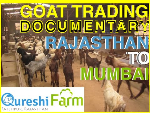 Full Documentary on Eid Goats & journey from Rajasthan to De