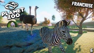 Download Zebra dan Burung Unta - Planet Zoo Indonesia | #6