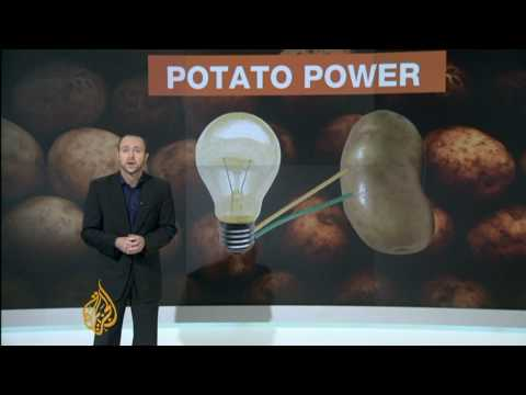 Potato could provide electricity to millions
