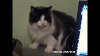 кошки смешнее не бывает...
