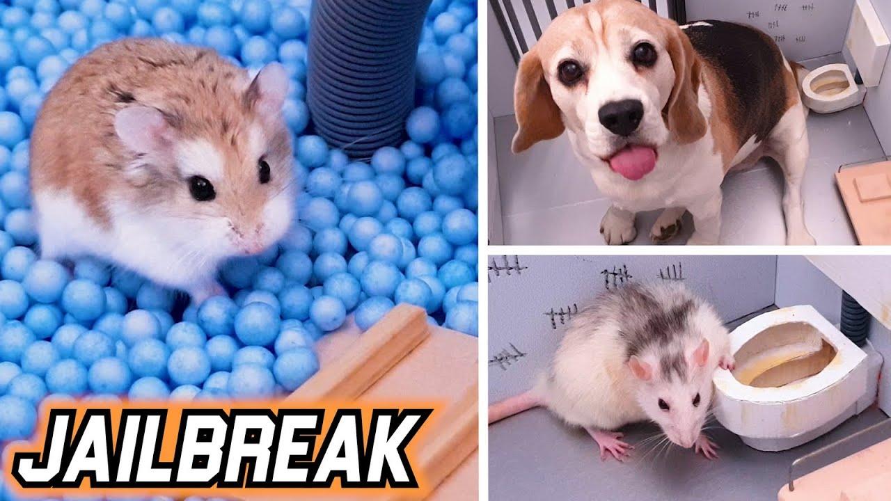 JAILBREAK with TRAPS - HAMSTER 🐹 / DOG 🐶 / RAT 🐭