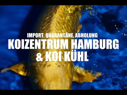 【4K】Koiteichblog [100] ★Koizentrum Hamburg und Koi Kühl