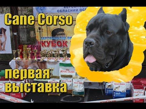 Выставка собак Кане Корсо,Херсон,апрель 2017,зарисовки.#CaneCorso