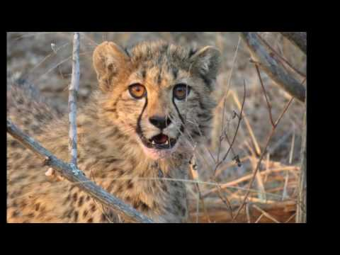Africa   Big Five Safari 2016