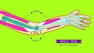 Сравнительная анатомия: Что делает нас животными? (Crash Course Biology #21). Перевод от Клушицы