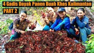 🔴Gadis Dayak Mencari Buah Maram Di Hutan   Kehidupan Suku Dayak Pedalaman Kalimantan Barat