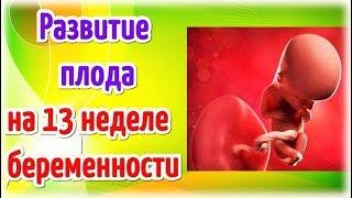развитие плода на 13 неделе беременности! Календарь беременности!