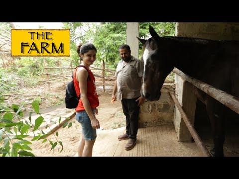 The Farm || Chennai