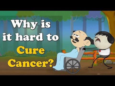 Why is it hard to Cure Cancer? | #aumsum