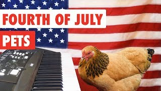 Fourth of July Pets | Funny Pet Video Compilation 2017