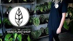 A Tour of The Rare Plant Shop! | 1000+ Rare Plants!