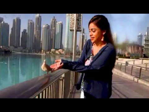 Dubai Diaries: 10 things that only happen here