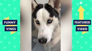 TRY NOT TO LAUGH - Funniest Animal Vines & Cute Pets Compilation | Funny Vines May 2018