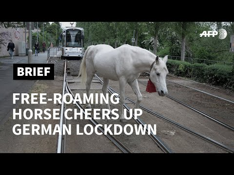 Free-roaming horse cheers up German lockdown | AFP