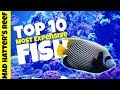 Top 10 Most Expensive Saltwater Fish