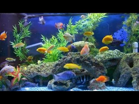 Feeding Aquarium Fishes