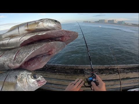 Pier Fishing For Spot Catch And Cook -  How To Catch And Cook Spot