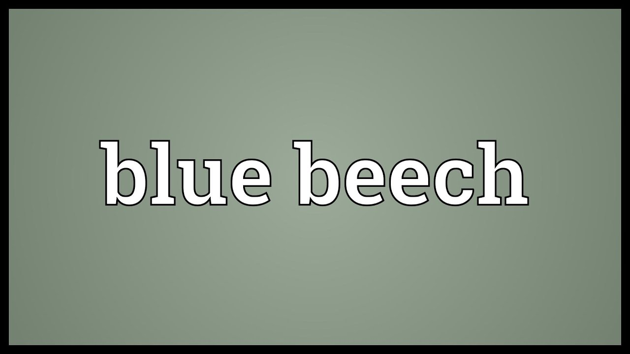 Beech is who the meaning, origin, synonyms and interpretation 62
