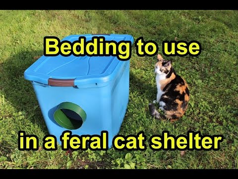 Bedding to use in a feral cat shelter