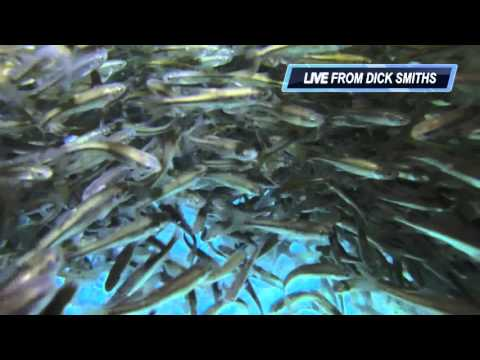 Minnows - Dick Smith's Live Bait & Tackle