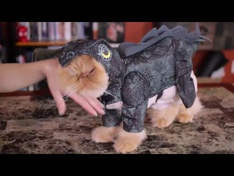 Cats Finally Speak Up About Wearing Clothes