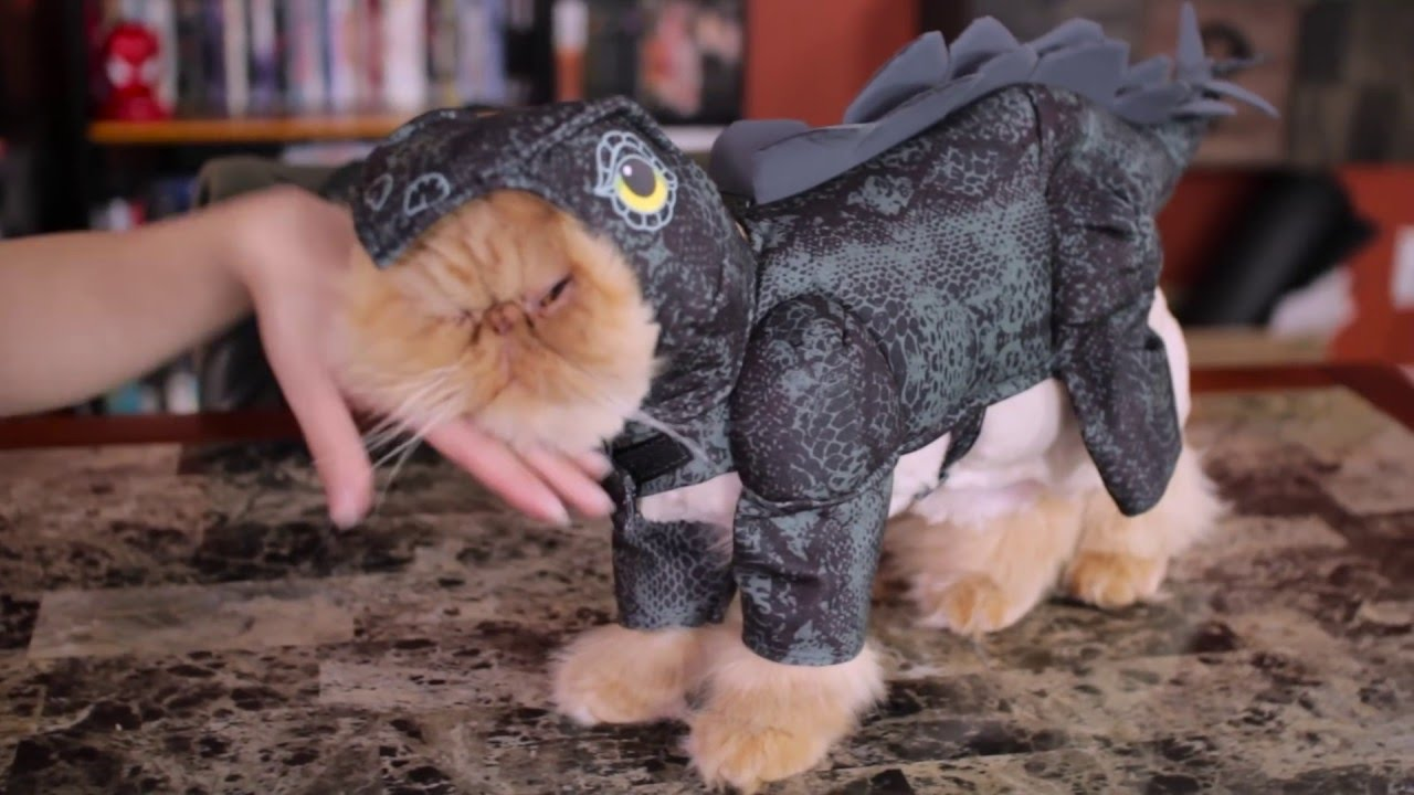 My Cats Review Costumes - My Cats Review Costumes