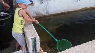 Макс показывает, как правильно ловить рыбу!