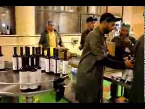 AL MASOUD TRADING   PALESTINE ORGANIC EXTRA VIRGIN OLIVE OIL BOTTLING IN WEST BANK