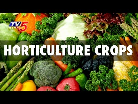 Vegetable Farming  Yielding Profits  For Farmers   Horticulture In Telangana   Annapurna   TV5 News