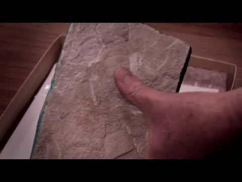 Inside the Manitoba Museum: Pt 1. Geology and Paleontology