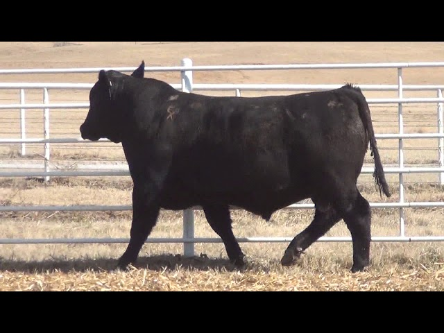 Express Ranches Lot 413