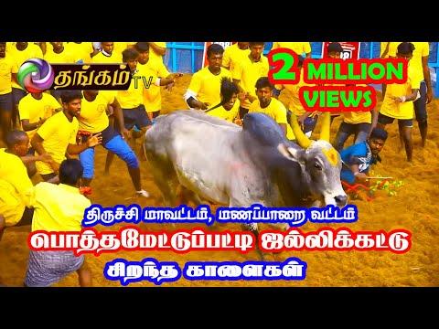 Thangam Tv Manapparai - Potthamettupatty Jallikattu 2018