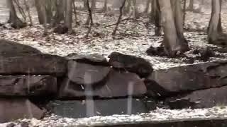 Hailstones Pelt Down Backyard - 1036930-2