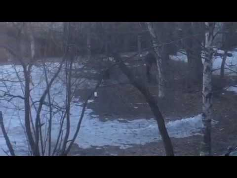 видео: Закладки в соломбале