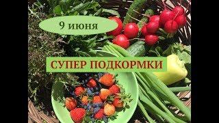 Высаживаем огурцы арбузы и дыни в открытый грунт. Дачные сезоны 9.06.18.