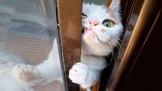 Cute and funny animals. Compilation..