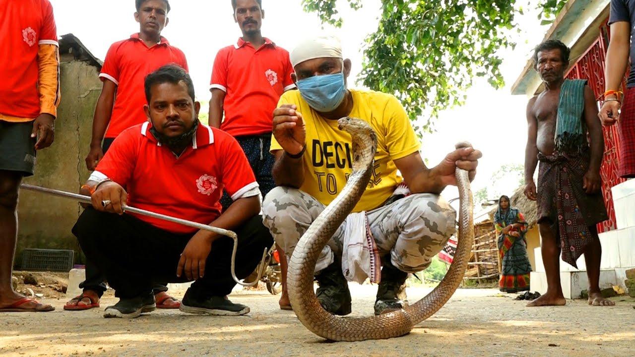 चंद्र नाग को रेस्क्यू करना कोई बच्चो का खेल नहीं,देखे किया हुआ इनके साथ।Venomous big Monocled cobra