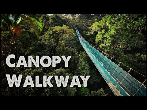 World's Largest Rainforest Canopy Walkway - Virtual Tour