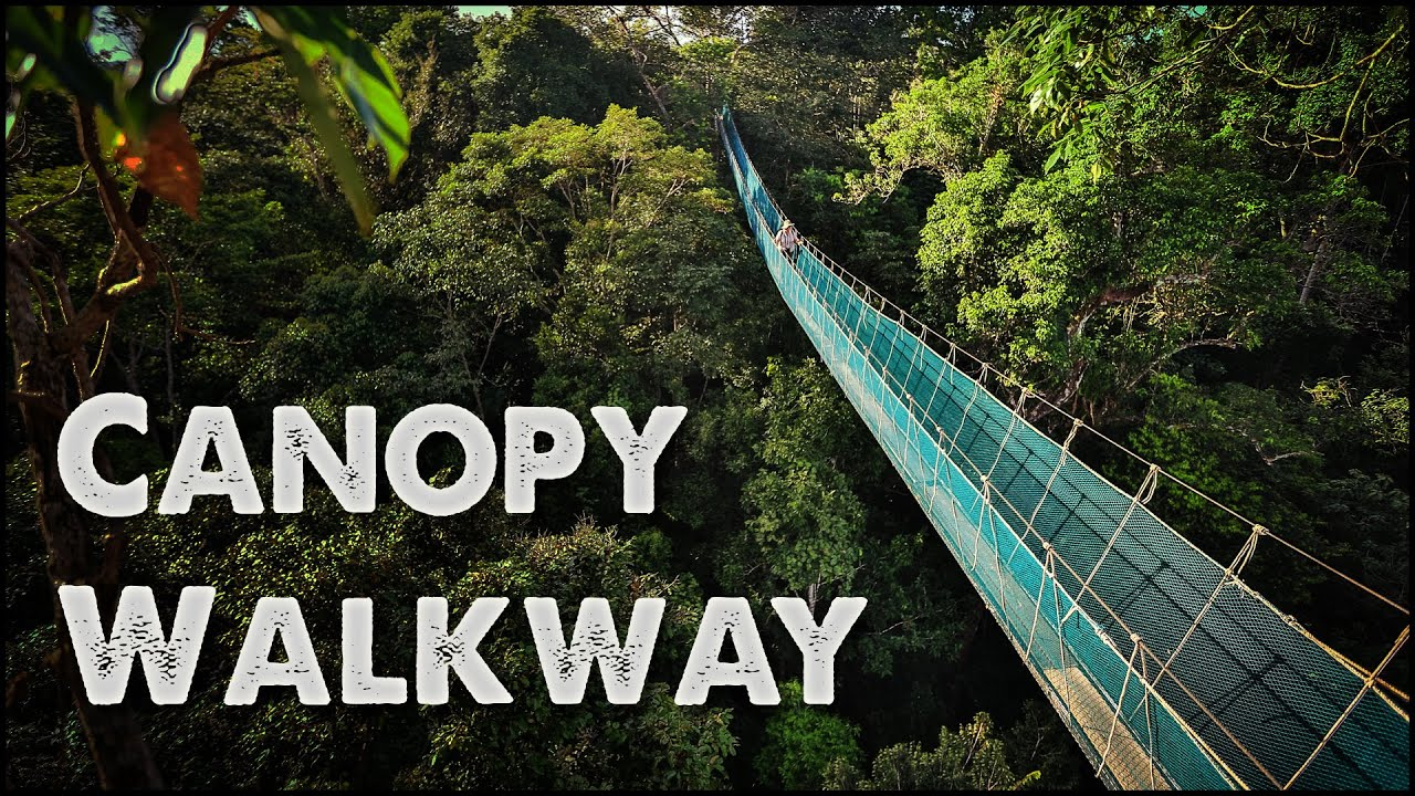& Worldu0027s Largest Rainforest Canopy Walkway - Virtual Tour - YouTube