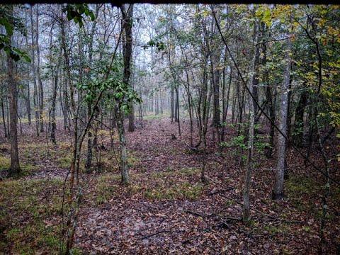 2019 Arkansas Deer Hunt