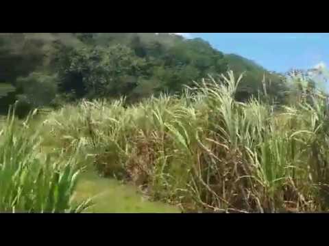 FARM/AGRICULTURAL LAND FOR SALE