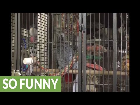 Parrot pulls off perfect impression of barking dog