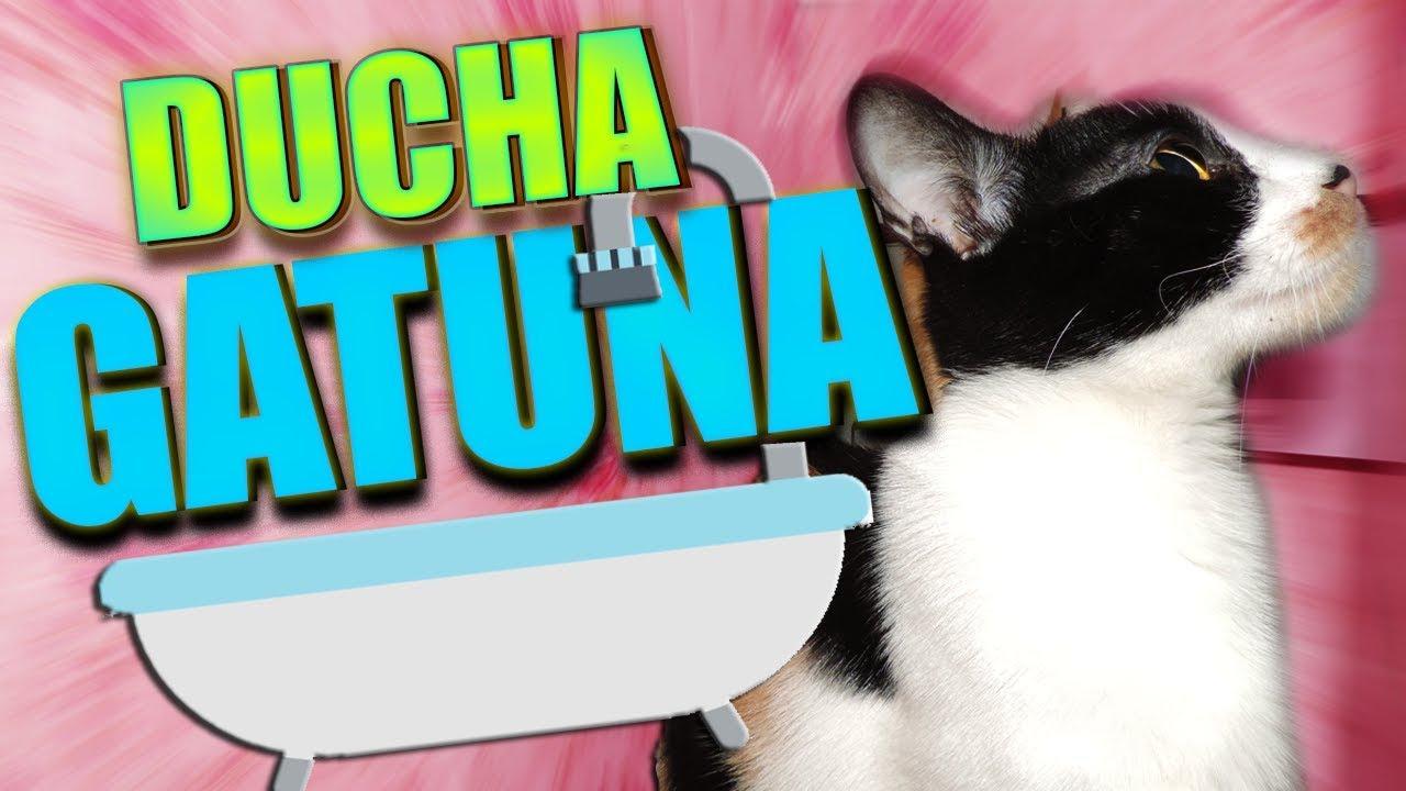 Intentando Duchar A Mi Gato Youtube